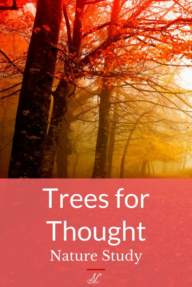 Trees for Thought